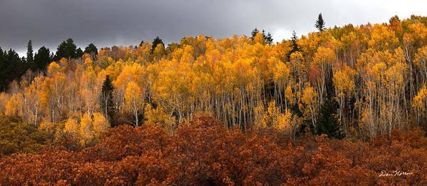 Photograph - Fall Color On The Manti La Sal Mountains by Dan Norris