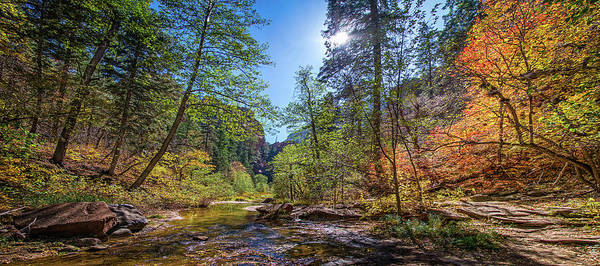 Photograph - Fall Color On The West Fork Trail by Lynn Bauer