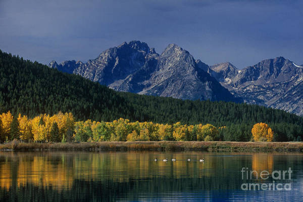 Photograph - Fall Color Oxbow Bend Grand Tetons Natoinal Park Wyoming by Dave Welling
