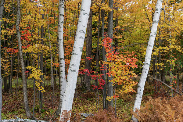 Photograph - Fall Color by Paul Schultz