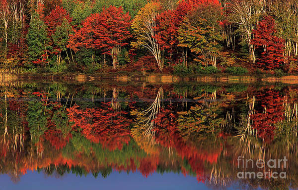 Photograph - Fall Color Reflected In Thornton Lake Michigan by Dave Welling
