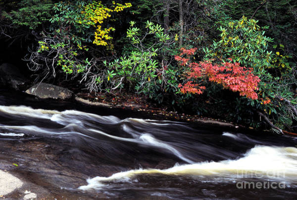 Photograph - Fall Color Swallow Falls State Park by Thomas R Fletcher