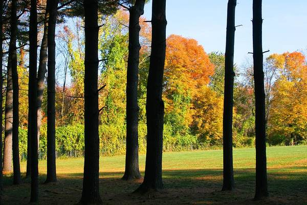 Photograph - Fall Color Through The Trees by Polly Castor