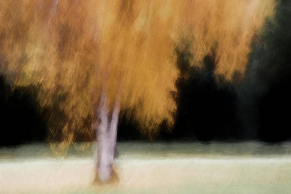 Wall Art - Photograph - Fall Color With Painterly Effect by Carol Leigh