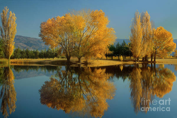Photograph - Fall Colored Trees Near Eastern Sierras California by Dave Welling