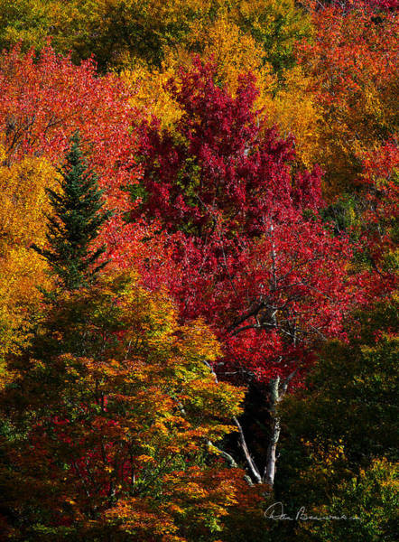 Photograph - Fall Colors 8743 by Dan Beauvais