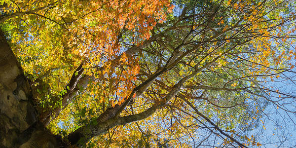 Photograph - Fall Colors Above Dunbar Cave by Ed Gleichman