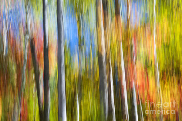 Abstract Impressionism Photograph - Fall Colors Abstract by Elena Elisseeva