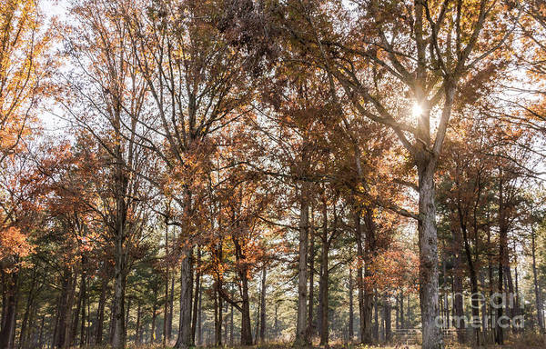 Photograph - Fall Colors by Andrea Anderegg
