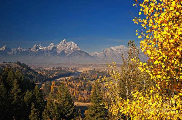 Photograph - Fall Colors At The Snake River Overlook by Sam Antonio Photography