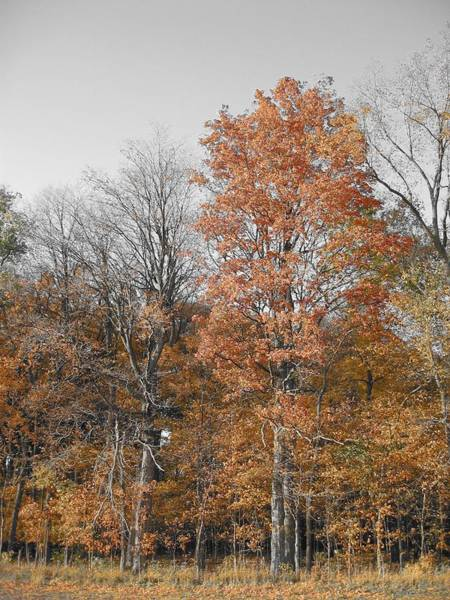 Photograph - Fall Colors by Dylan Punke