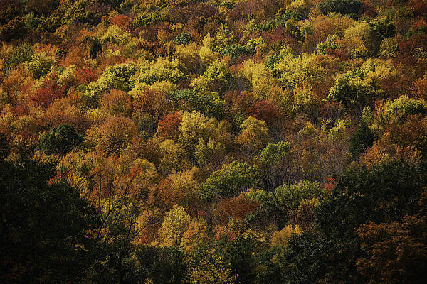 Photograph - Fall Colors by Garry Gay