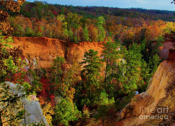 Photograph - Fall Colors In The Canyon by Barbara Bowen