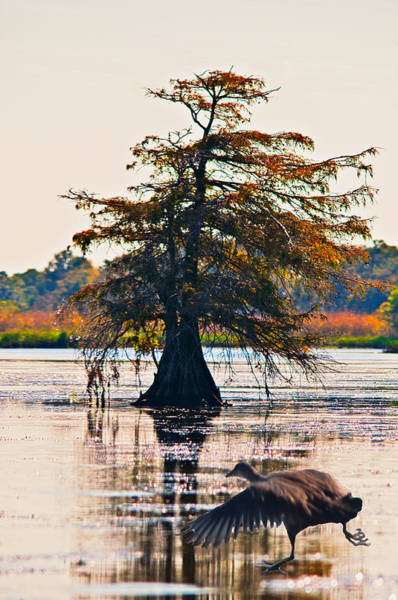 Fall Colors In The Marsh Art Print by Bill Perry