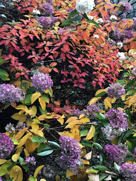 Wall Art - Photograph - Fall Colors by Jamie Lynn