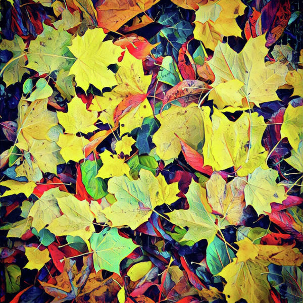 Photograph - Fall Colors by Kim Lessel