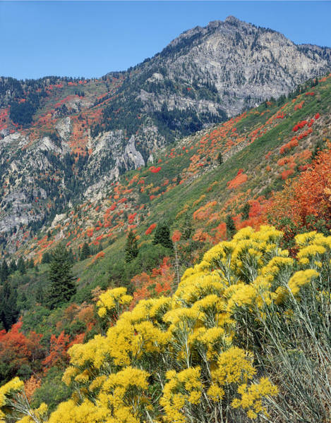 Photograph - 212m42-fall Colors Near Mt. Timpanogos  by Ed  Cooper Photography