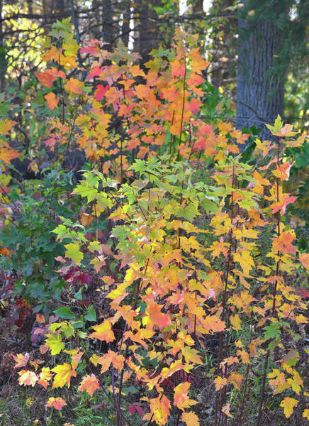Photograph - Fall Colors Of Wisconsin by Ray Mathis