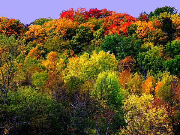 Photograph - Fall Colors by Scott Hovind
