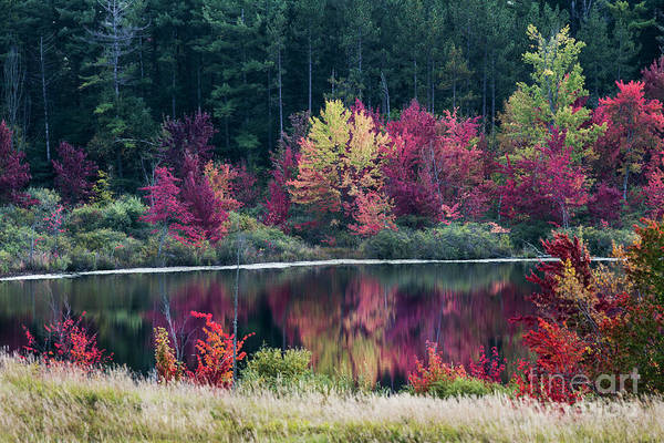 Photograph - Fall Colors - Thompson Lake 7581 by Steve Somerville
