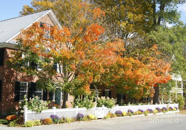 Photograph - Fall Colour In Grafton by David Birchall