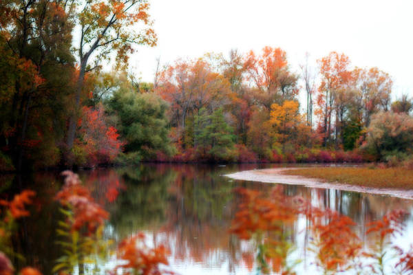 Photograph - Fall Colour On The Sydenham by Cathy Beharriell