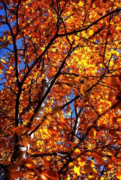 Photograph - Fall Colours by David Matthews