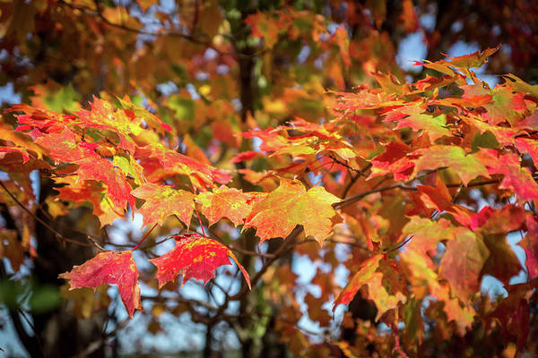 Photograph - Fall Colours by Framing Places