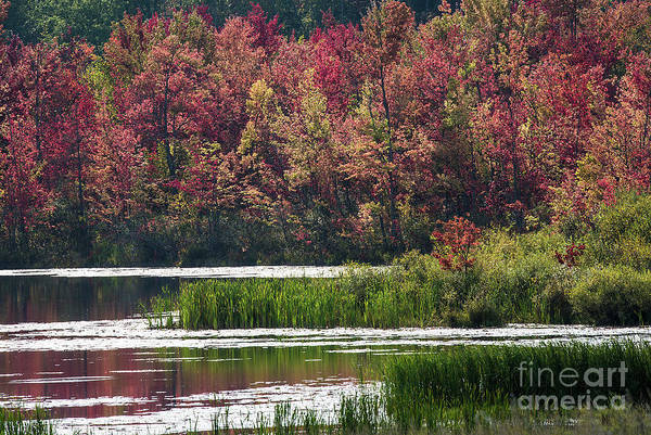 Photograph - Fall Colours - Thompson Lake 7619 by Steve Somerville