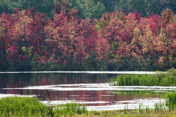 Photograph - Fall Colours - Thompson Lake 7623 by Steve Somerville