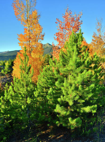 Photograph - Fall Comes To Dillon Colorado by Ray Mathis
