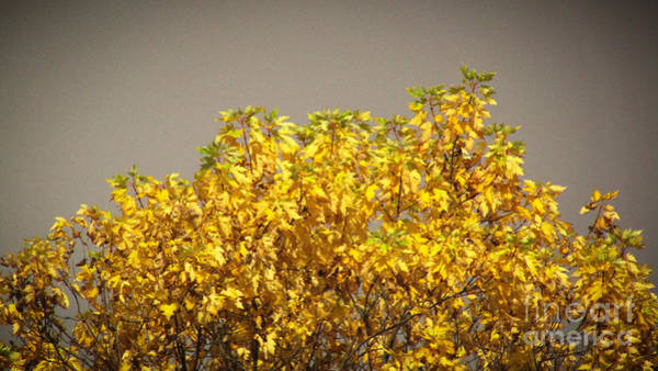 Photograph - Fall Crown by Robert Knight