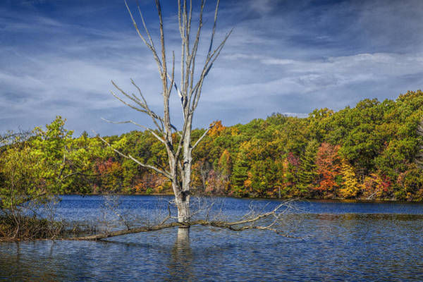 Photograph - Fall Dead Tree Stickup In Michigan Lake by Randall Nyhof
