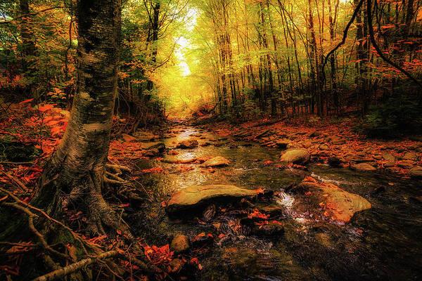 Photograph - Fall Dreams by Robert Clifford