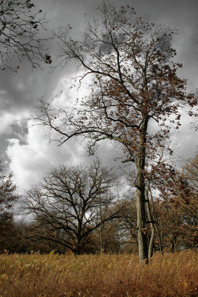 Photograph - Fall by Dylan Punke