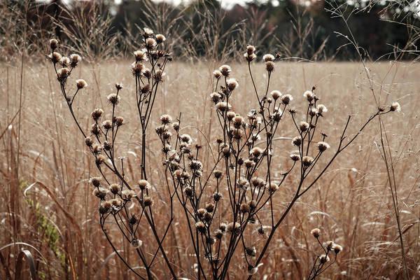 Photograph - Fall Field by Glenn DiPaola