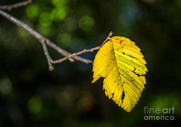Photograph - Fall Flag by Michael Arend