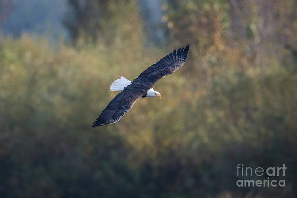 Photograph - Fall Flight by Craig Leaper