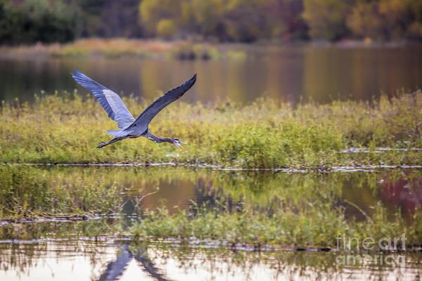 Photograph - Fall Flight by Jemmy Archer