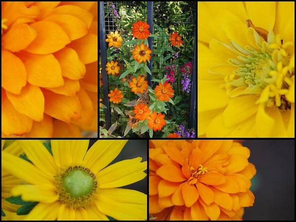 Photograph - Fall Flowers by Donna Bentley