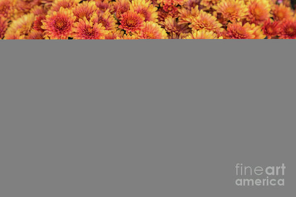Photograph - Fall Flowers by Karin Pinkham