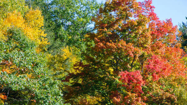 Photograph - Fall Foliage 1 by Kristin Hatt