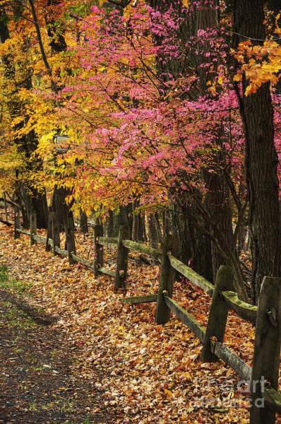 Photograph - Fall Foliage And Fence by Debra Fedchin