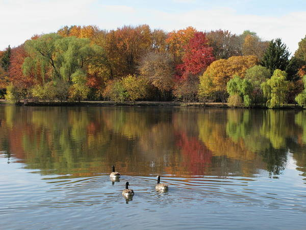 Photograph - Fall Foliage And Pond Reflections by Frank Romeo
