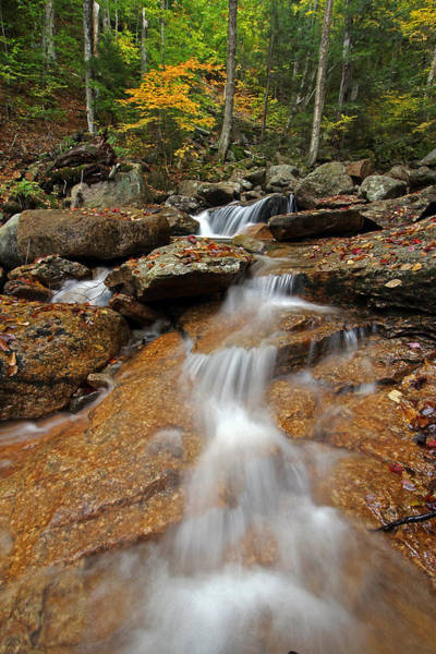 Photograph - Fall Foliage At Cascade Brook by Juergen Roth