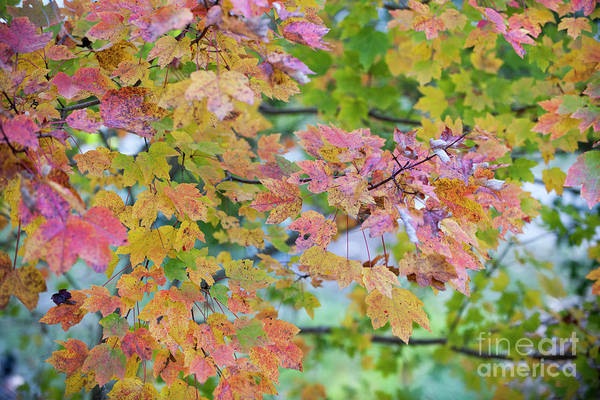 Photograph - Fall Foliage by Dale Powell