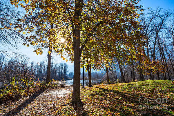 Color Burst Wall Art - Photograph - Fall Foliage In Leavenworth Waterfront Park In Washington State. by Jamie Pham
