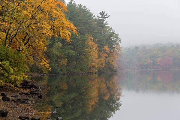 Photograph - Fall Foliage In The Fog by Brian MacLean
