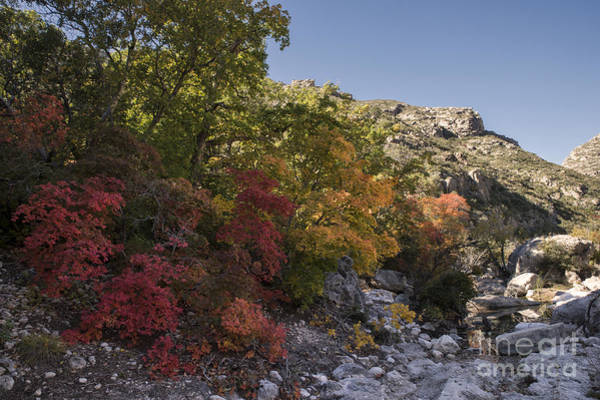 Photograph - Fall Foliage In The Guadalupes by Melany Sarafis