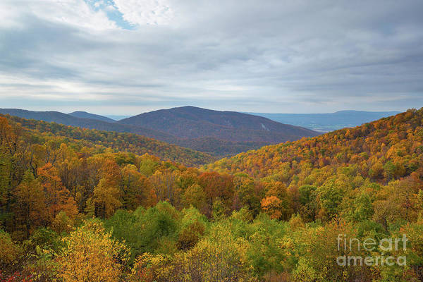 Shenandoah Wall Art - Photograph - Fall Foliage In The Mountains  by Michael Ver Sprill
